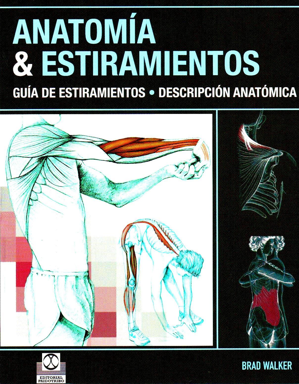 Anatomía & Estiramientos | Balletin Dance
